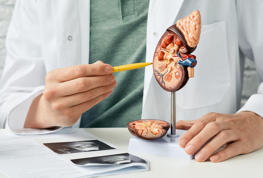 urologia cm medicum